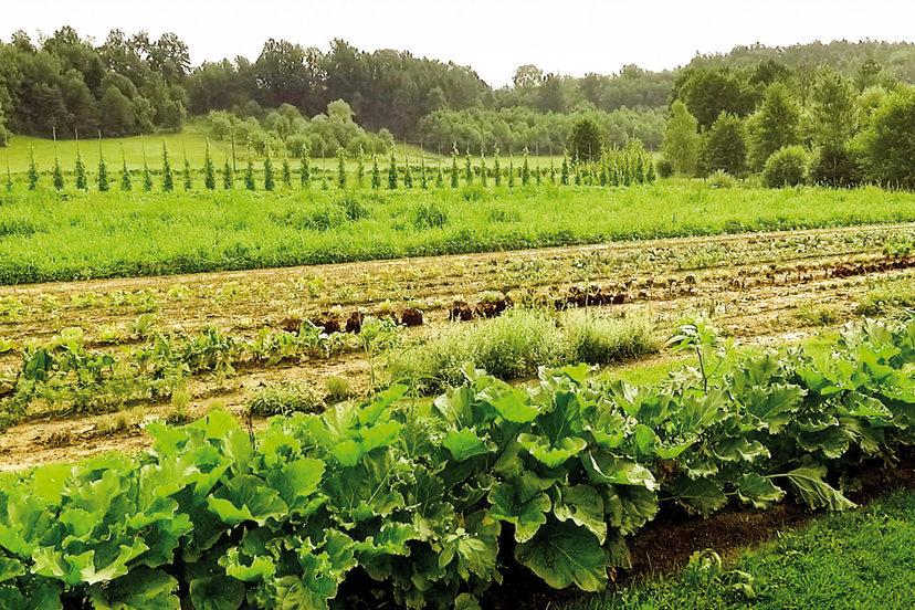 Gemüsegarten | © Rauch-Hof