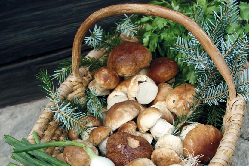 Frische Pilze für köstliche Gerichte | © Kaminstubn